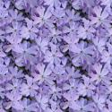 Free Wildflower Background Pattern